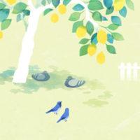 夏のおひるね レモン 木 鳩 オオルリ
