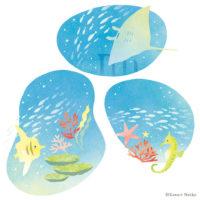 海 海中 夏 サンゴ マンタ タツノオトシゴ 熱帯魚 海底 ヒトデ